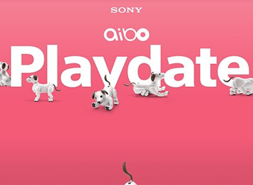 aibo Playdate New York