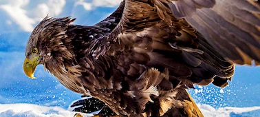 Close-up of eagle showing 8K clarity