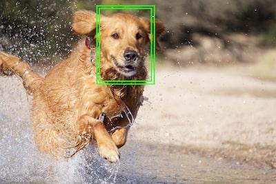 Lock-on AF tracking image