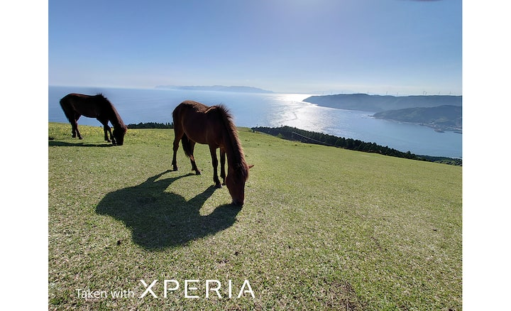 Horses on hilltop overlooking the sea