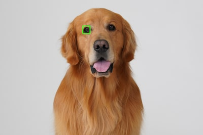 Stunning animal images with Real-time Eye AF for Animals
