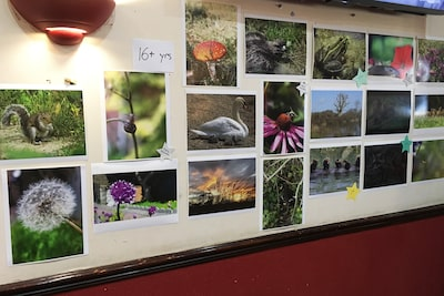 Sony DADC in UK Highlights Biodiversity Photography Competition and Insect House Building at its Summer Event