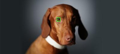 Focalizarea automată a ochilor pentru animale urmărește precis animalele sălbatice și pe cele de companie.