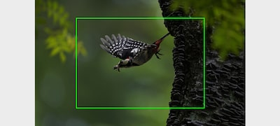 Fotografiere în serie cu viteză excepțional de mare, de 10 cps, cu urmărire AF/AE