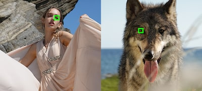 Enhanced Real-time Eye AF for better portraits and pet photos