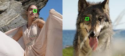 Továbbfejlesztett valós idejű Eye AF funkció a jobb portré- és állatfotókért