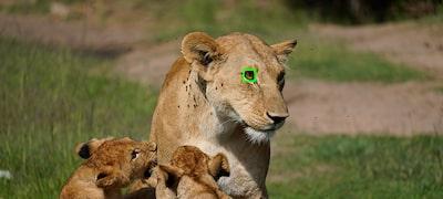 Lấy nét tự động thời gian thực theo mắt động vật