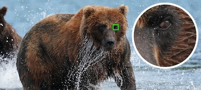 Real-time Eye AF for humans and animals