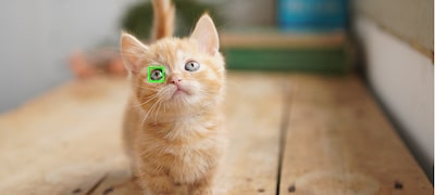 Real-time Eye AF for animal